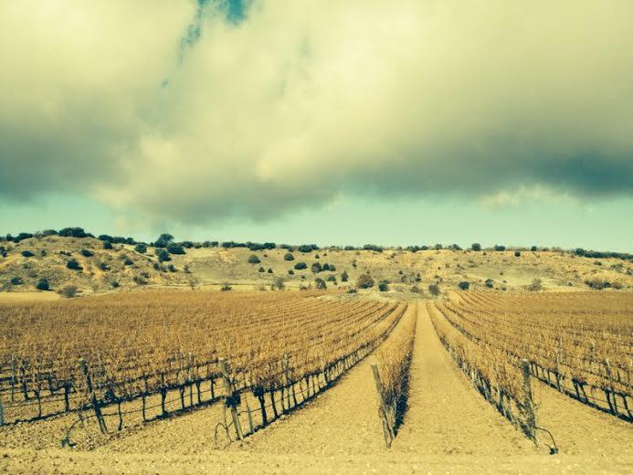 Vineyards in the Ribera del Duero